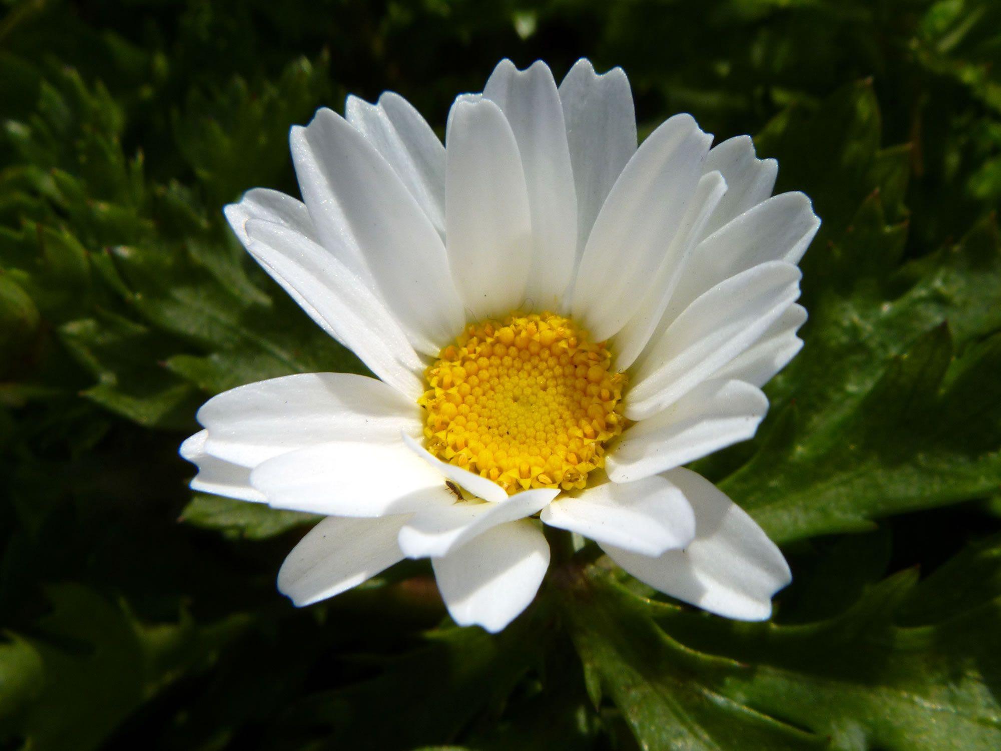 цветик семицветик картинка из сказки