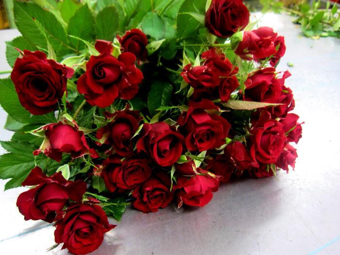 Фото розы темно красные
