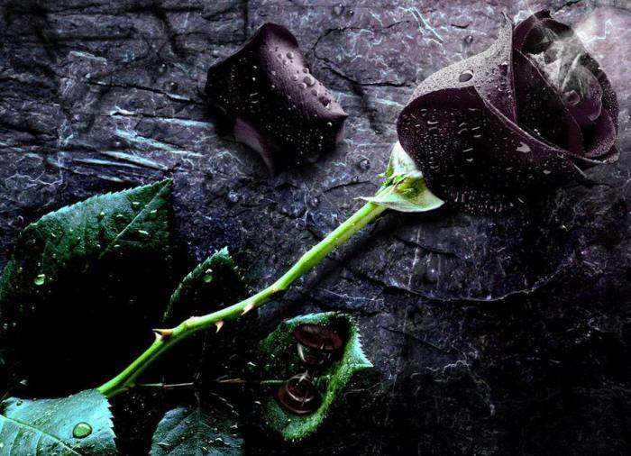 Фотки букетов роз