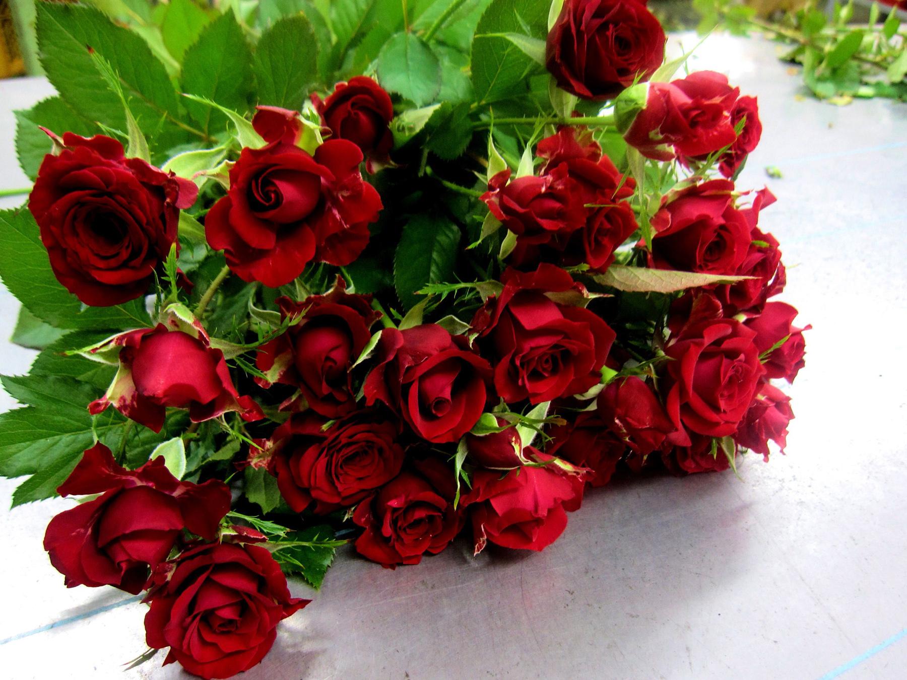 http://kartinki-cvetov.ru/images/rozy/roza42.jpg