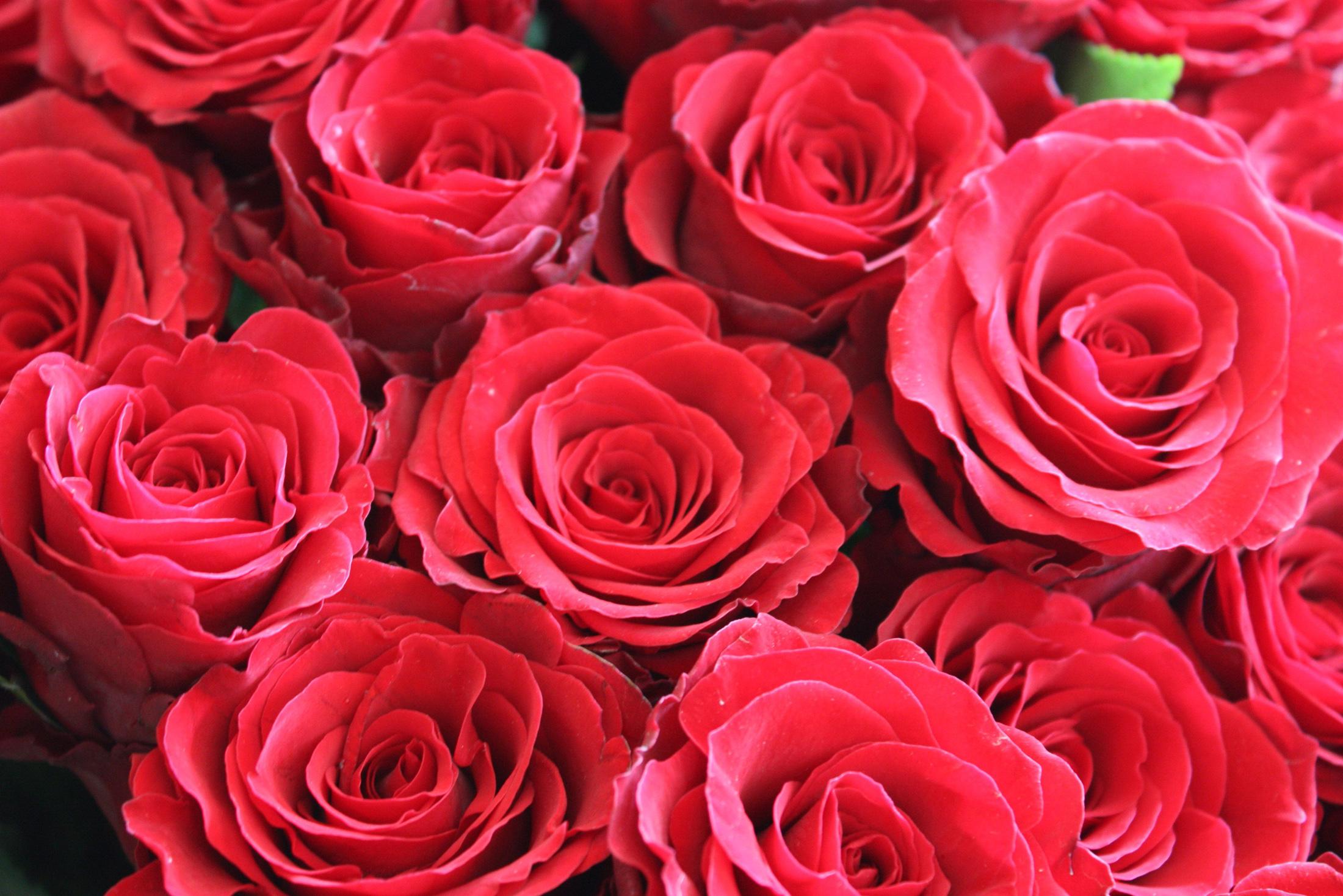 http://kartinki-cvetov.ru/images/rozy/roza9.jpg