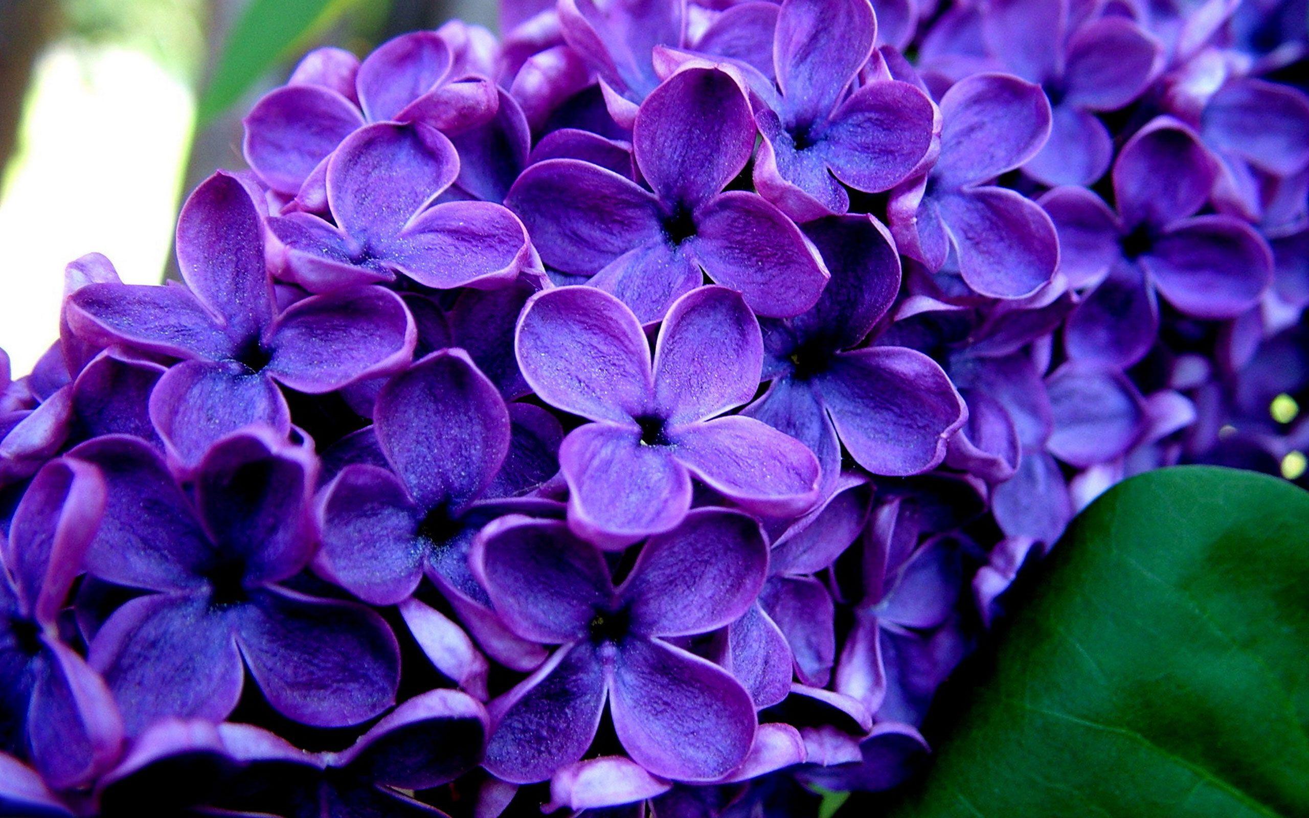 картинки анимации очень красивые цветы