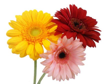 http://kartinki-cvetov.ru/images2/raznocvetnye-cvety57_small.jpg