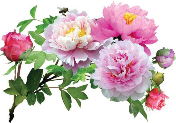 фото букетов роз цветов в хорошем качестве