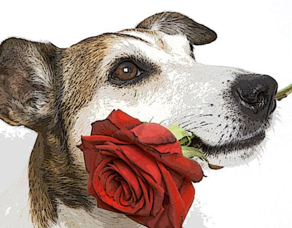 Фото щенков с цветком в зубах