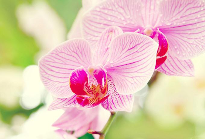 Орхидеи обои на рабочий стол в высоком качестве 2