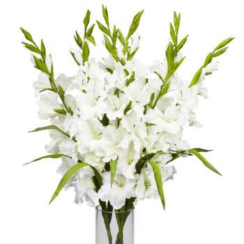 букет белых гладиолусов