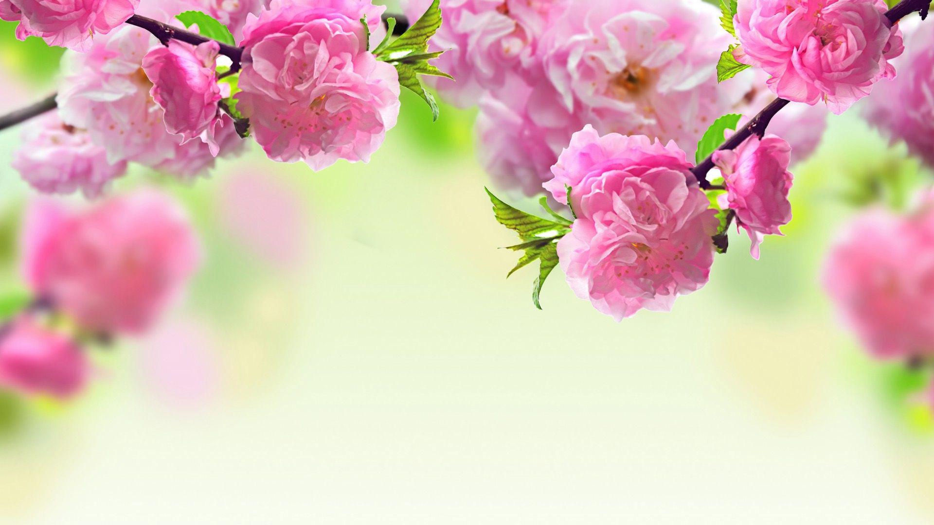 Цветы на обои красивые