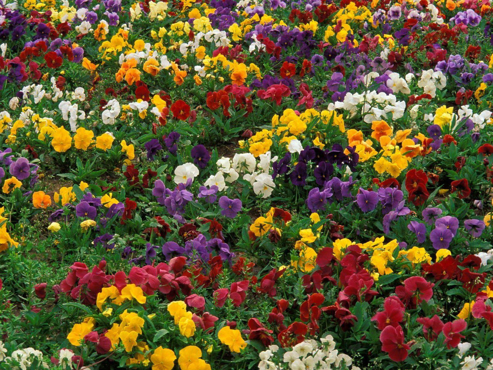 Много цветов фото картинки
