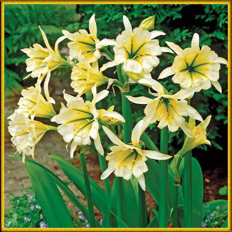 Жёлтые многолетние цветы фото с названиями