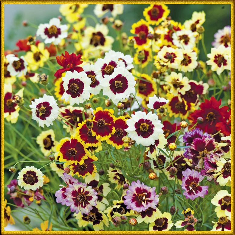 ... цветы с названиями в фото коллекции: kartinki-cvetov.ru/dvuhcvetnye-cvety.html