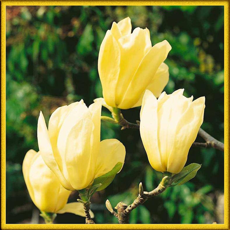 Цветы желтого цвета с фото и