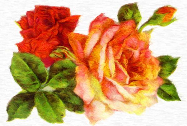 розы рисунок
