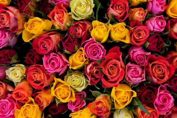http://kartinki-cvetov.ru/images9/mnogo-roz_07_small.jpg