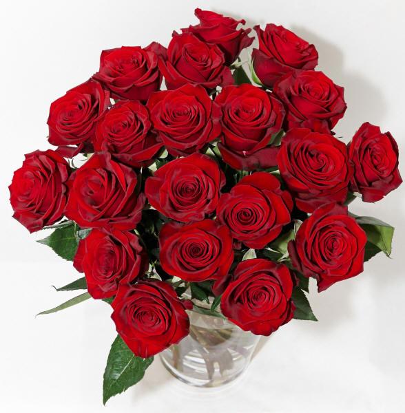 Розы красные розы алые розы белые