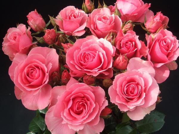 лучшие фото цветов