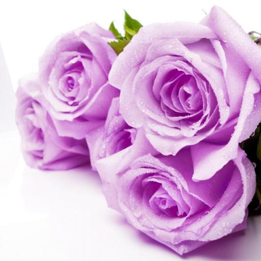 Розы цветы разные