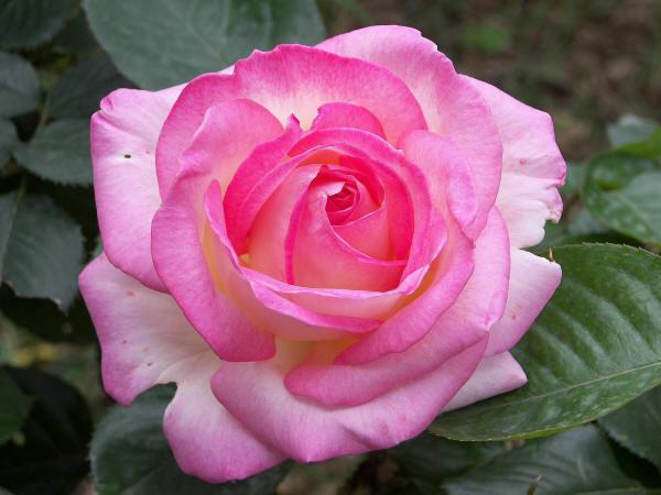 замечательные красивые цветы на фото