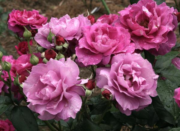 красивые цветы в фотографии