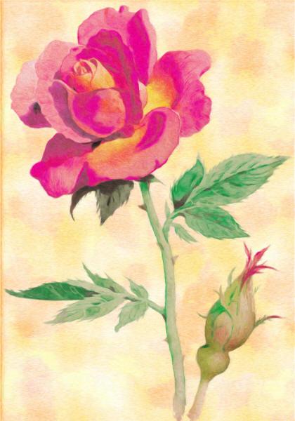 Роза нарисованная