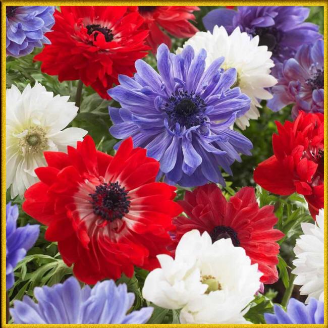 Мужчина встречает с цветами