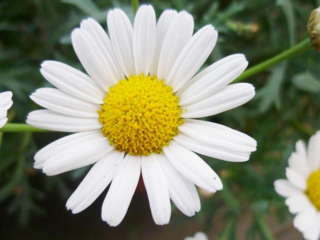 Цветы фото по 1