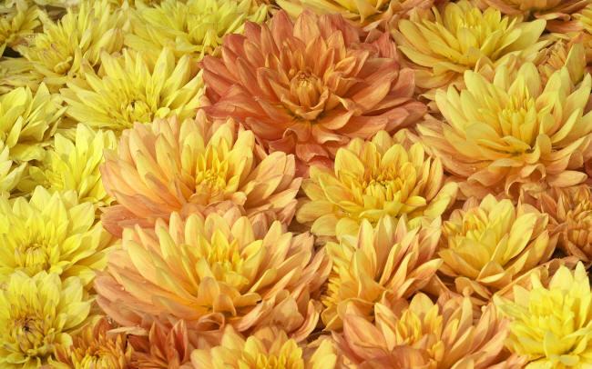 Список названий оранжевых цветов с