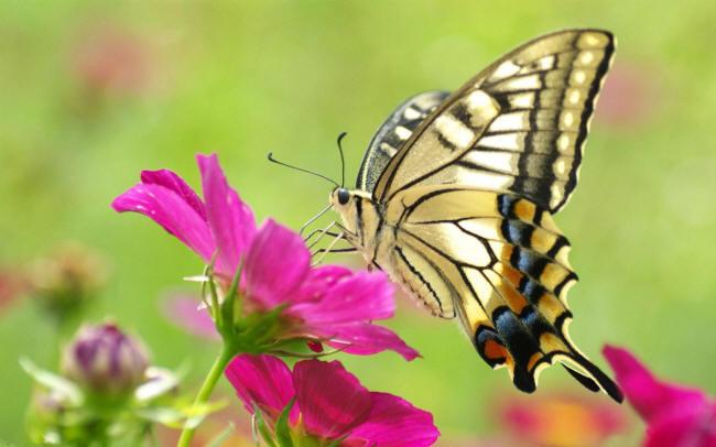 Бабочки в цветах рисунки фото
