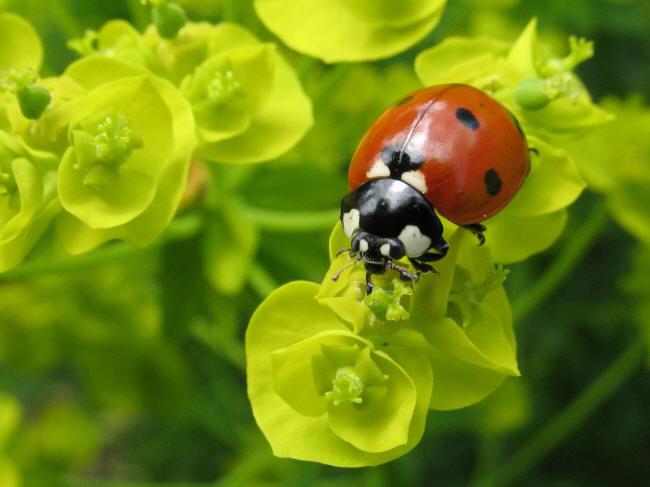 картинки с насекомыми для школьников