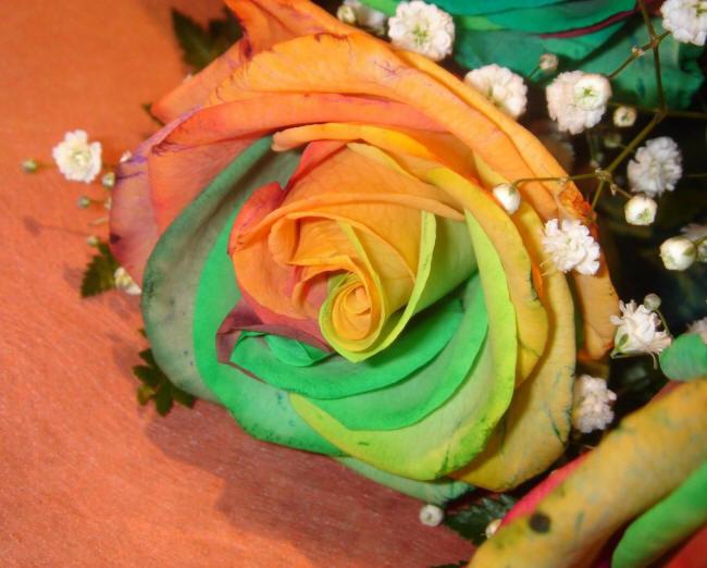 Радужные розы своими руками