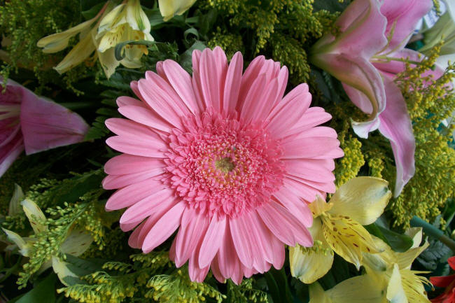 Самые красивые цветы фото с названиями