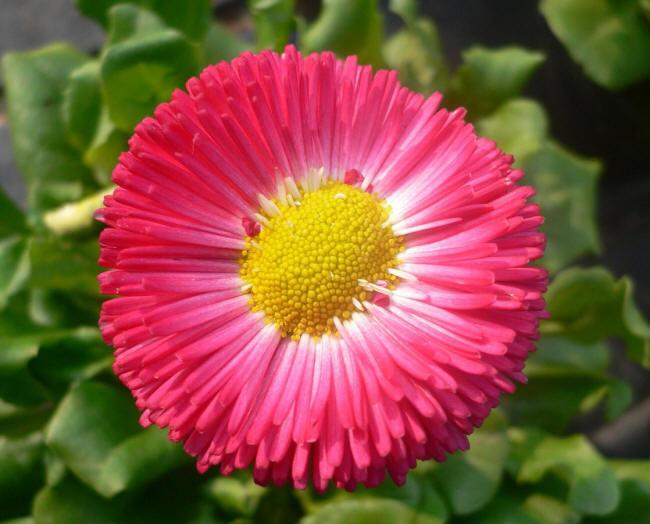 фото название розовых роз