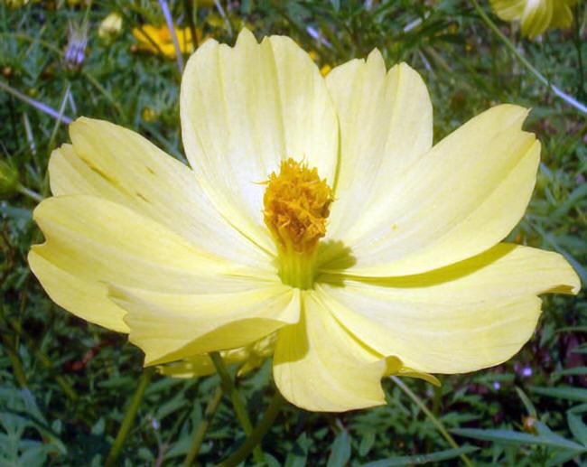 Как называется цветы желтого цвета
