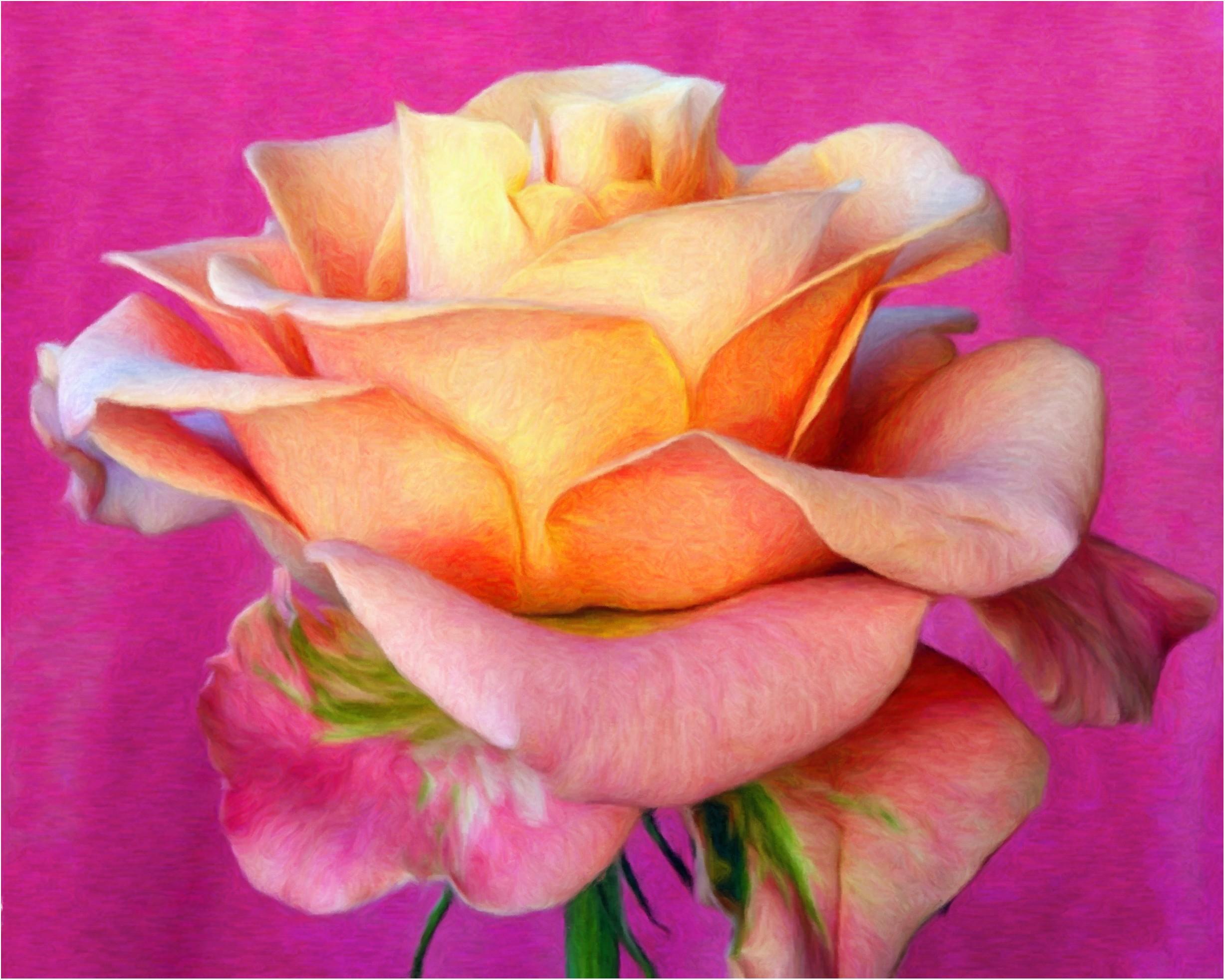 Розы на фото лучшие картинки красивых цветов роз - dc11