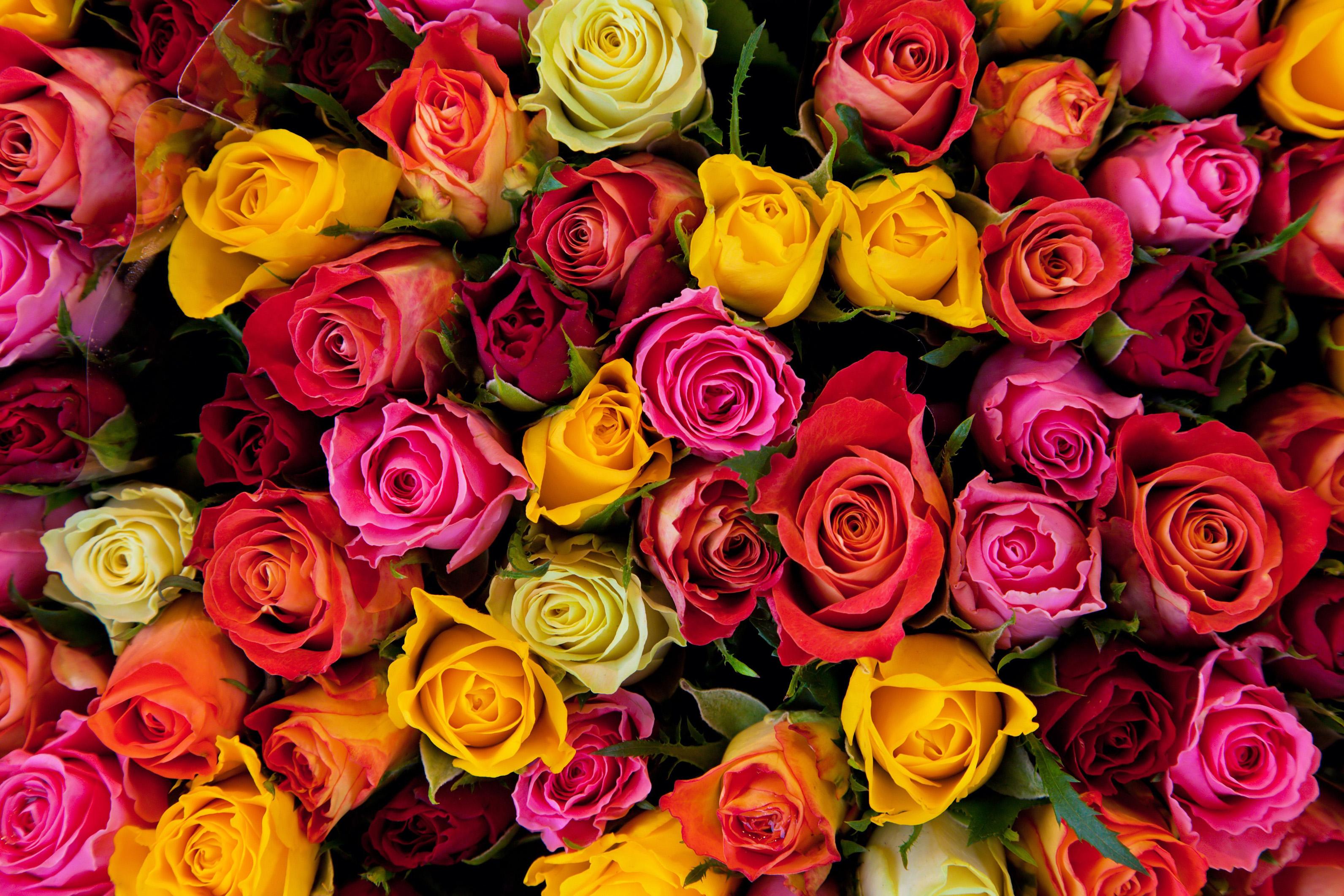 Фото букеты роз разных цветов фото