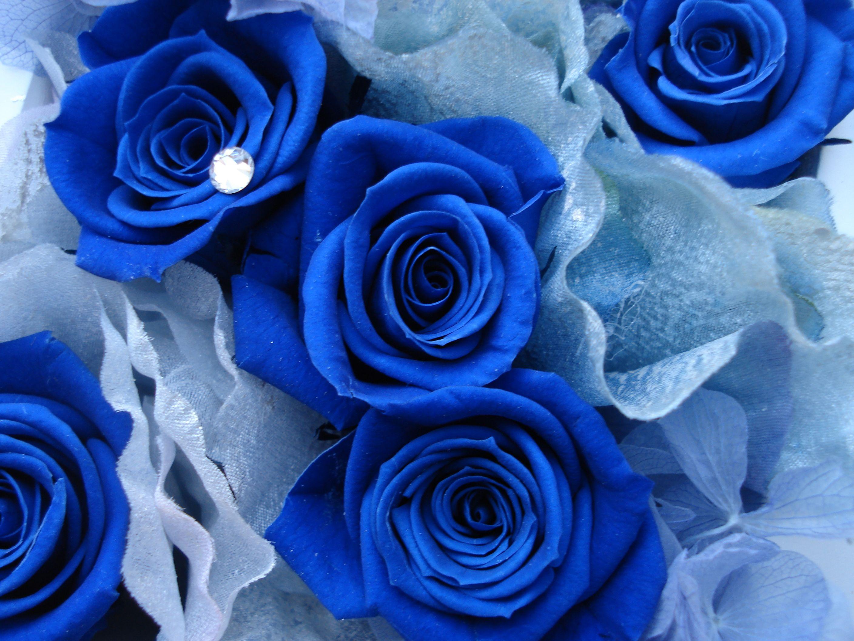 Много фото розы