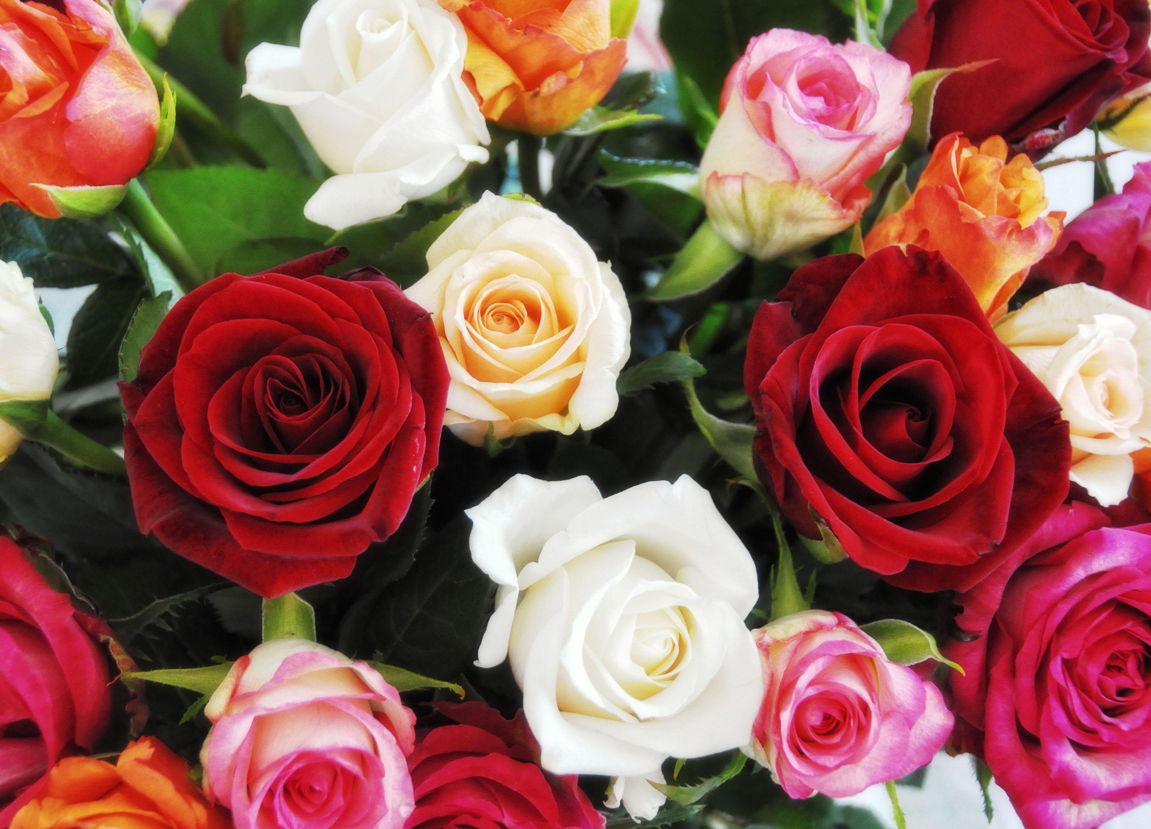 Красивый букет роз для женщины