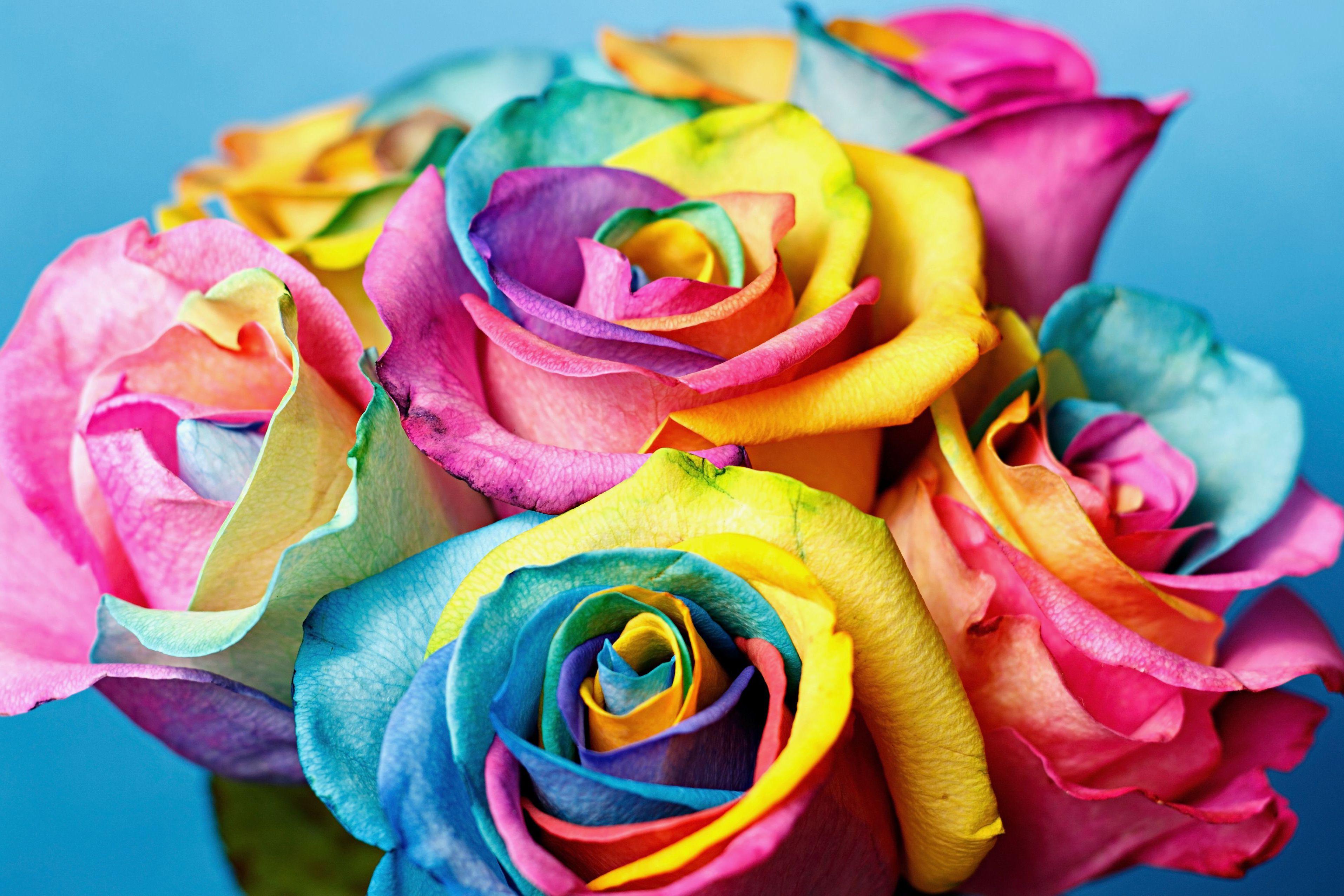 Самые красивые цветы для сада много ФОТО
