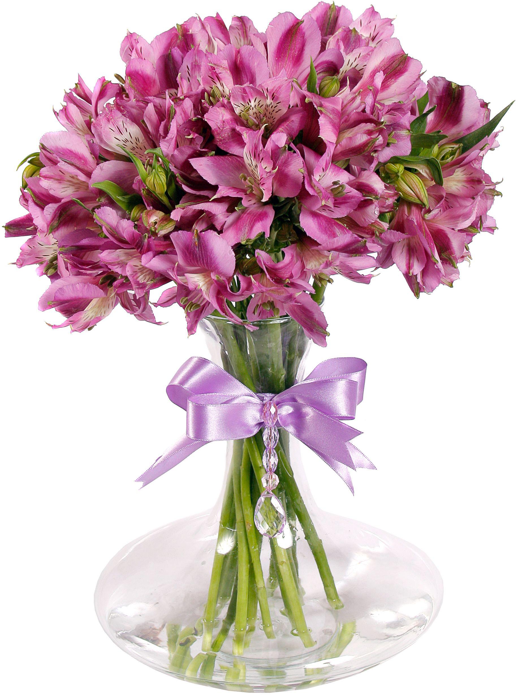 Цветы альстромерии картинка