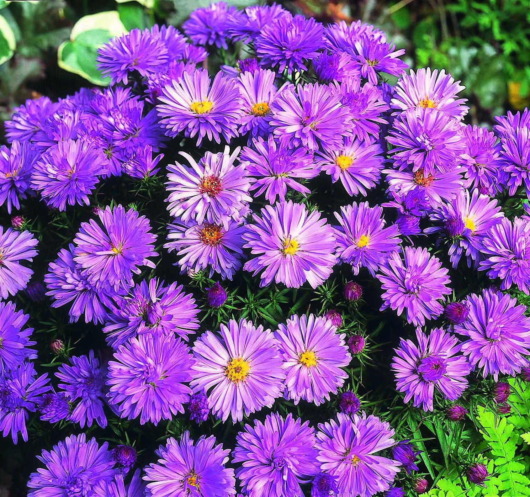 Фотографии с красивыми цветами могут