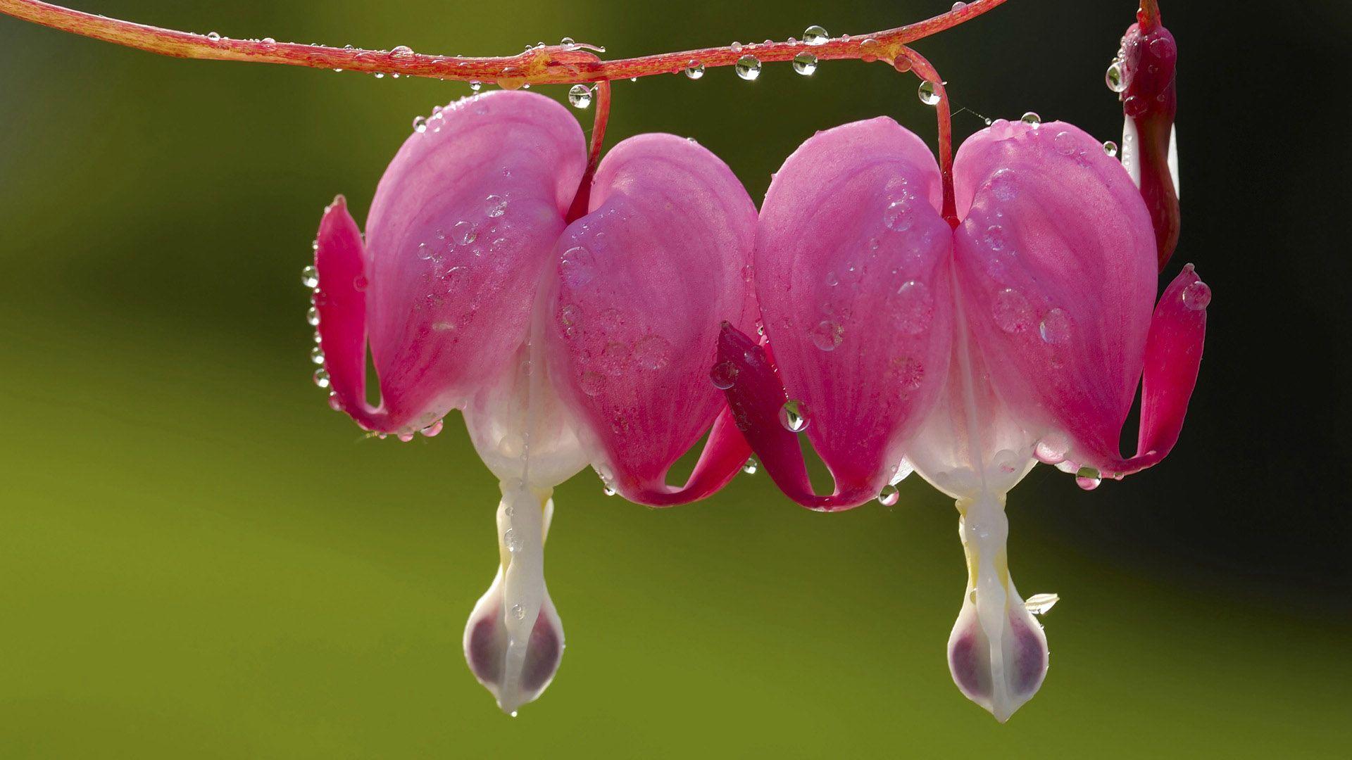 К чему снится два цветка растут рядом с необычными лепестками