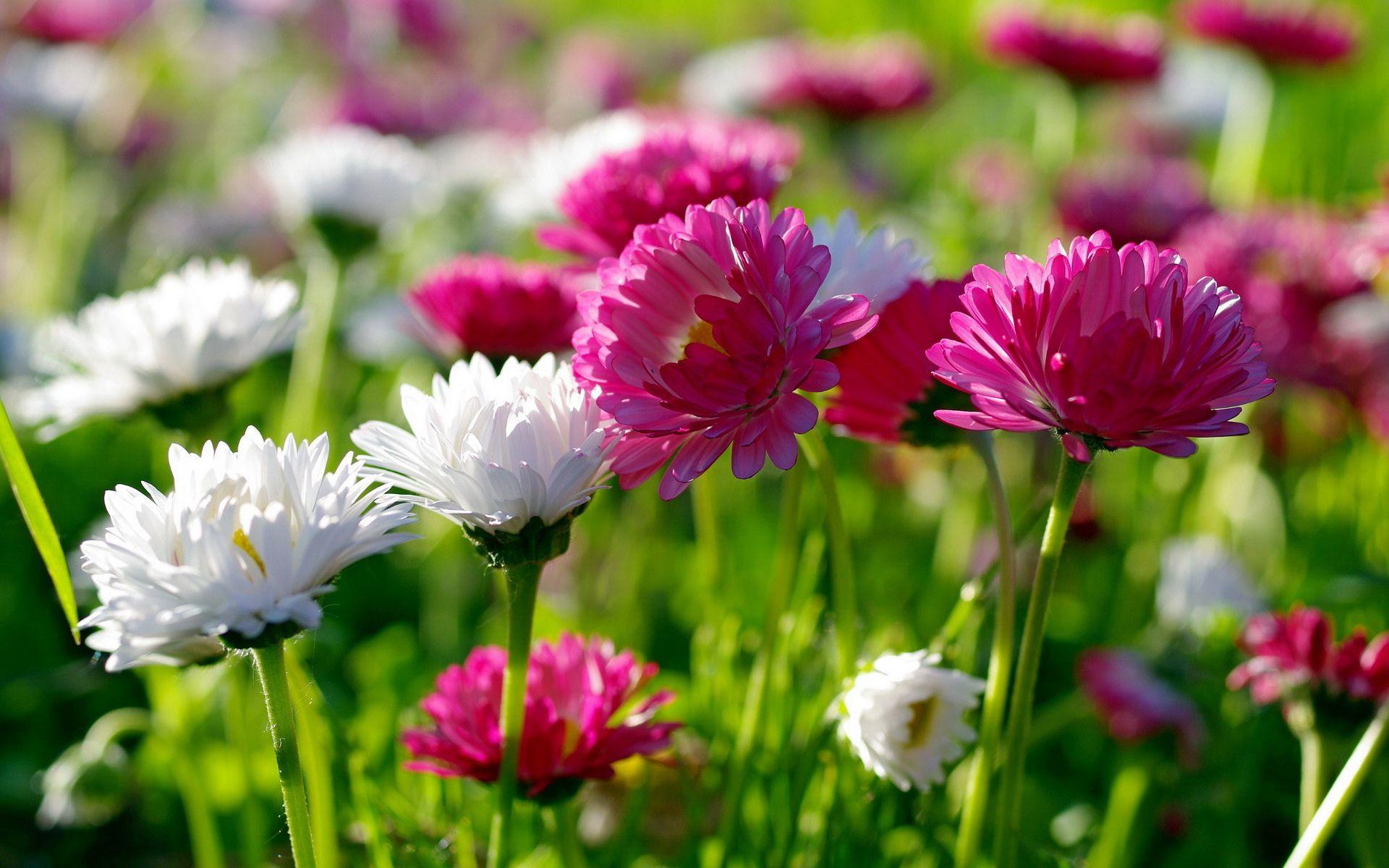 Букеты цветов с пожеланиями доброй ночи все же