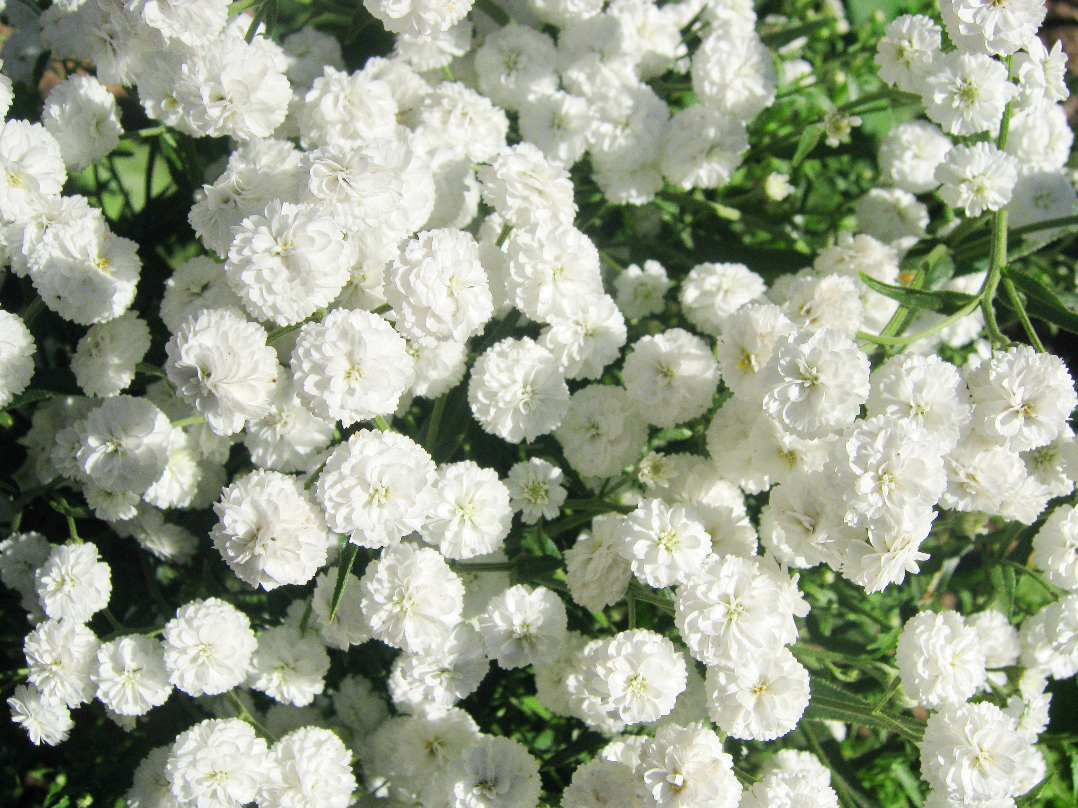 Ранние весенние садовые цветы фото рейх, просуществовавший