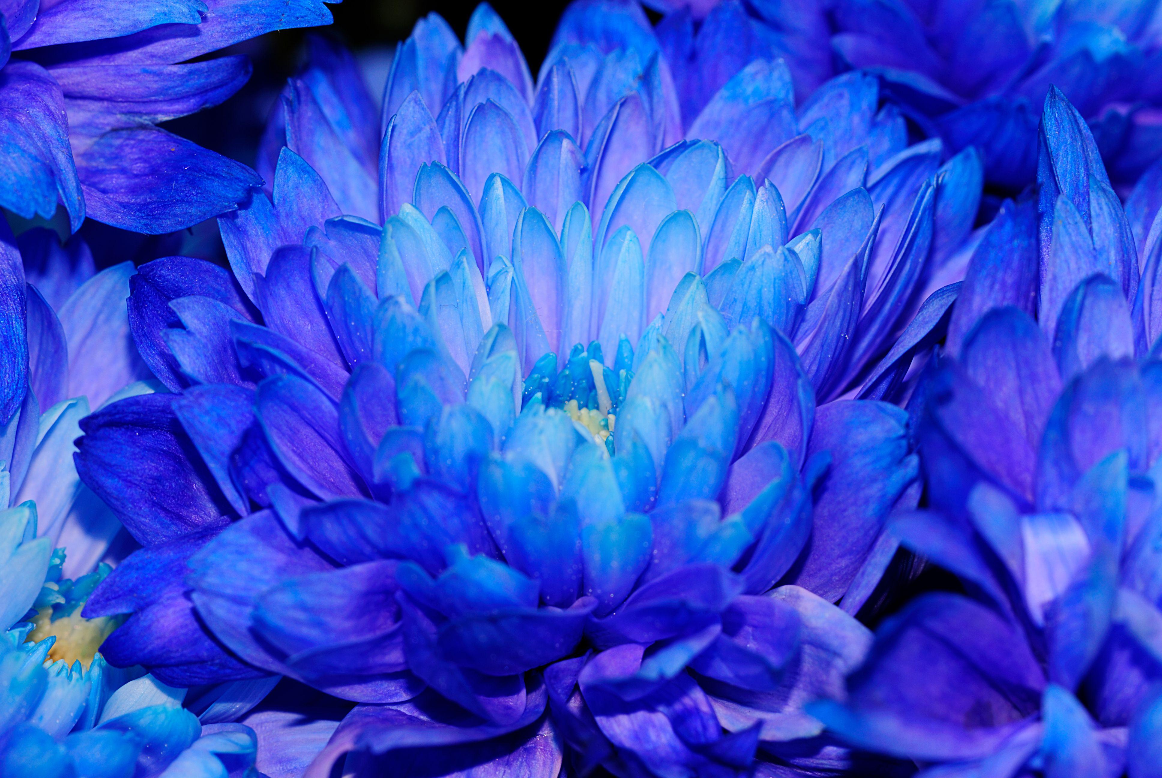 картинки ярко-синего цвета бокалы