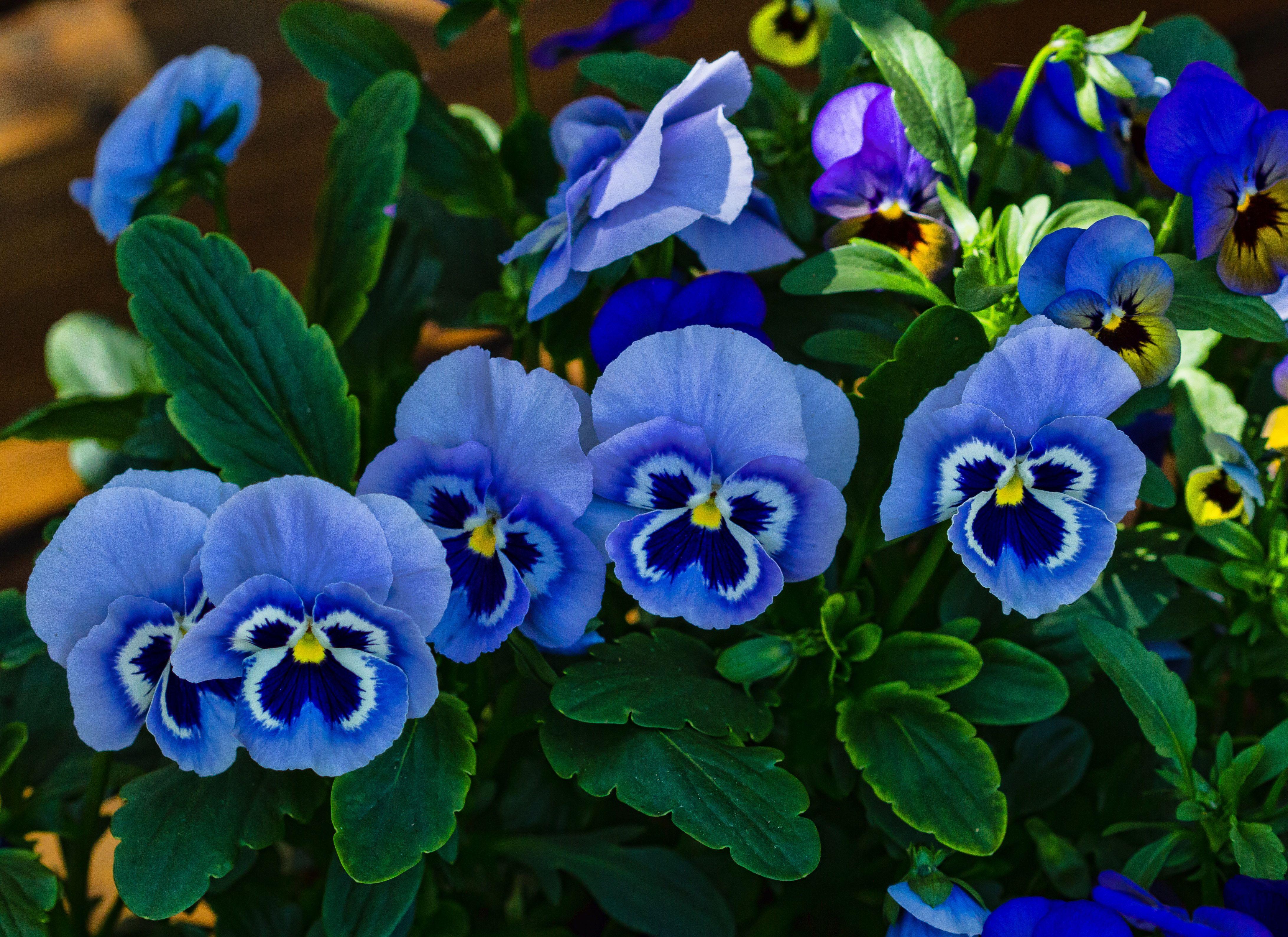 мальчика, изображенные синие живые цветы названия и фото прав, теперь