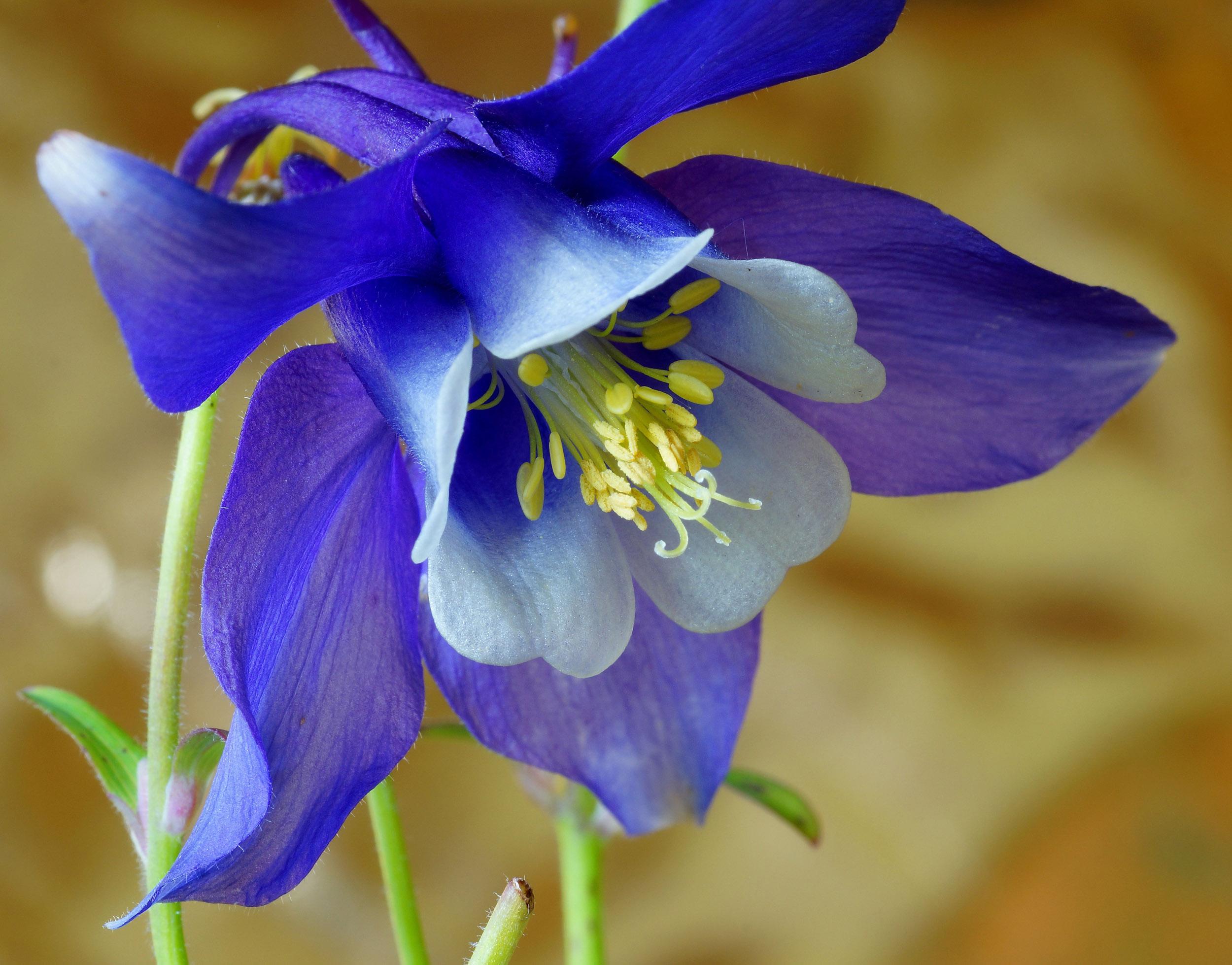 фотографии цветов с названиями фото через иглу
