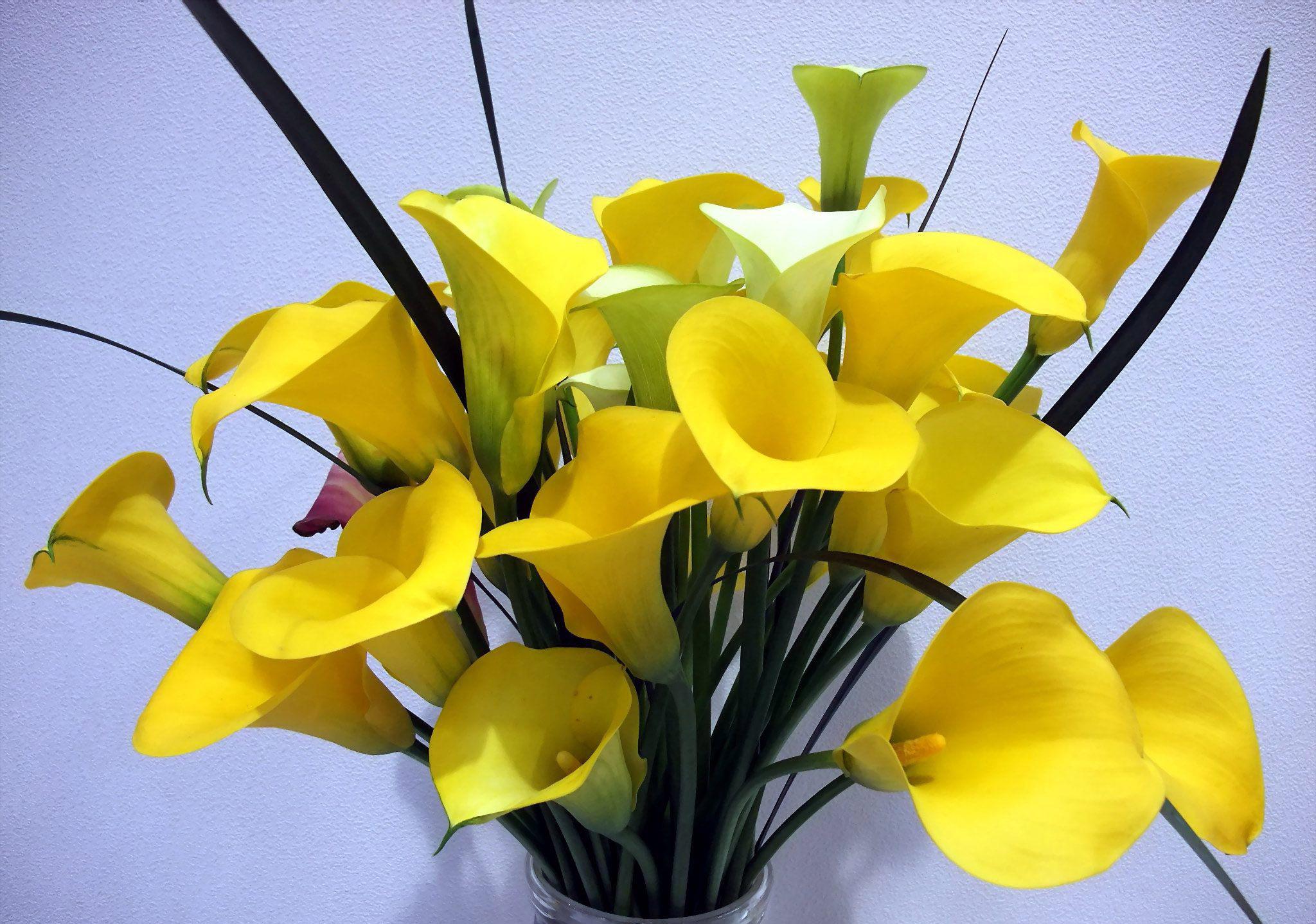 виды цветов для букетов фото с названиями недорогих натяжных потолков