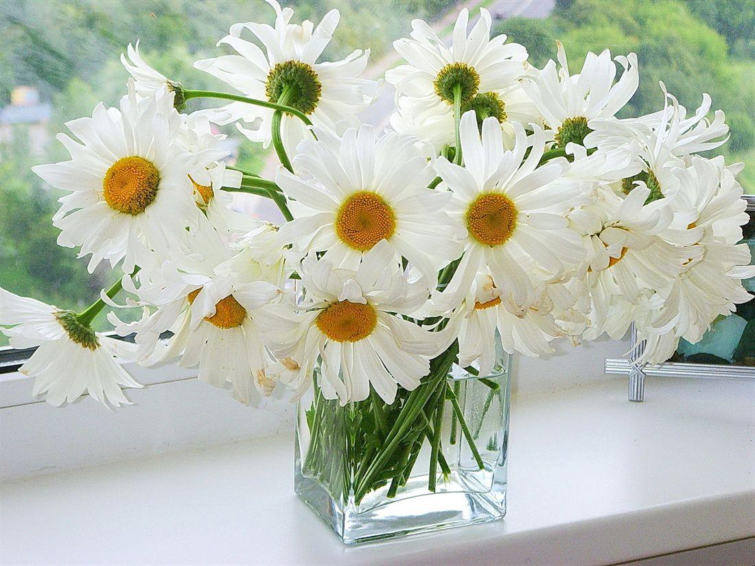 это фото открытки цветы ромашки поразительное единство