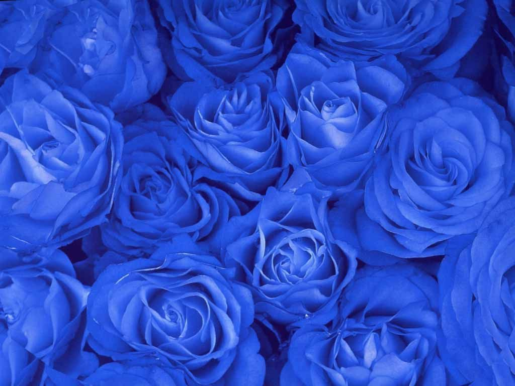 картинки розочки синие может