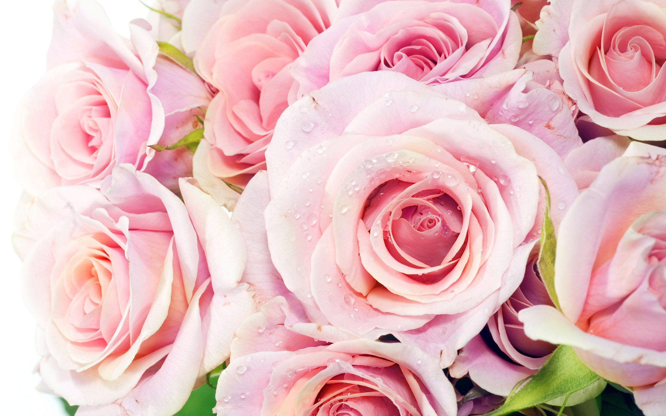 Картинка розовые розы во весь экран